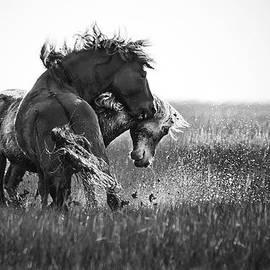 Bob Decker - Clash of Two Wild Stallions