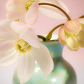 Jan Bickerton - Clematis Flowers 1