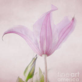 LHJB Photography - Clematis on pink background