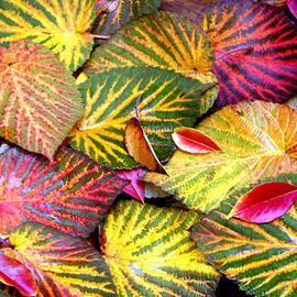 Debra Orlean - Closeup of Colorful Dove Tree Leaves