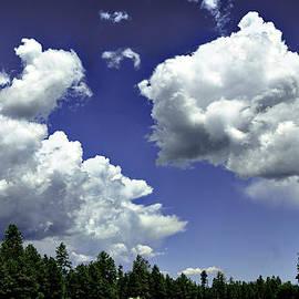 Clouds - Ponderosa Pines Happy Jack Az by Bob and Nadine Johnston