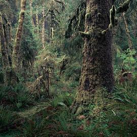 Alexander Kunz - Coastal Forest 3