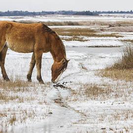 Bob Decker - Coastal Wild Horse in Snow
