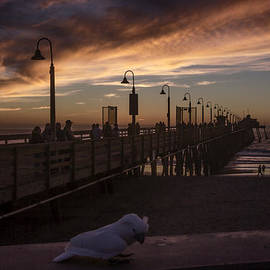 Cockatoo At The Pier by Photographic Art by Russel Ray Photos
