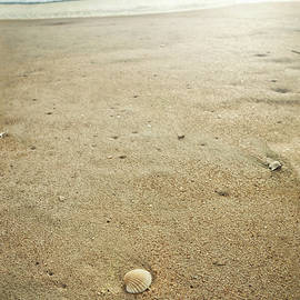 Marianne Campolongo - Cockle Shell on Florida Beach