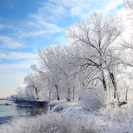 Shane Bechler - Cold Frosty Morning