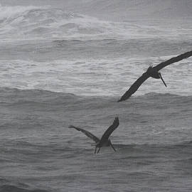 Tom Janca - Cold -Windy-Foggy-Rough Ocean And The Pelicans Are Still Fishing
