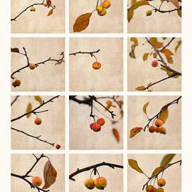 Alexander Senin - Collage Paradise Apple