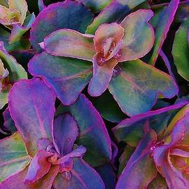 Sharon Ackley - Color Drenched Succulents