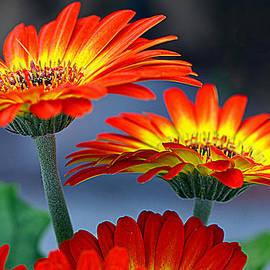 Tanya Tanski - Color Me Happy.........