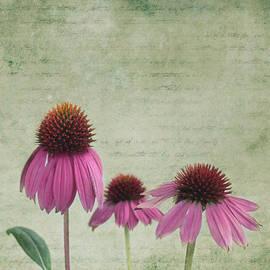 Color of Spring by Kim Hojnacki