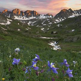 Rob Greebon - Colorado Wildflower Images - Columbine at American Basin 1