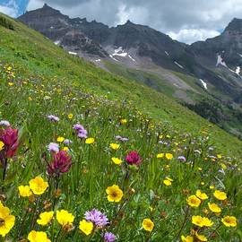 Colorado Wildflowers And Mountains by Cascade Colors