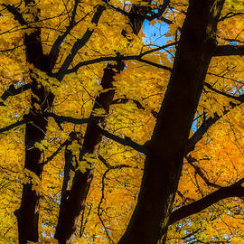 Colorful Canopy by Albert Seger