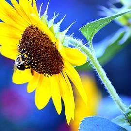 Karen  Majkrzak - Colorful Sunflower Abstract