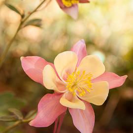 Columbine by Roselynne Broussard