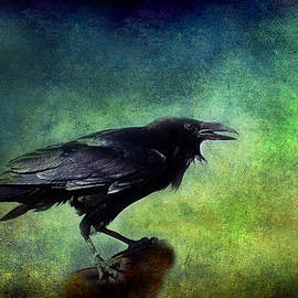Barbara Manis - Common Raven