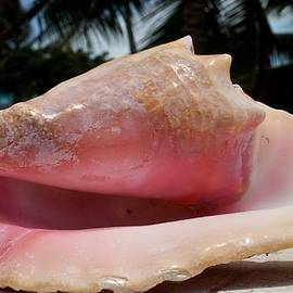 Island Conch Shell by Kristina Deane