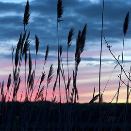 Marianne Campolongo - Connecticut Sunset with Reeds Series 4