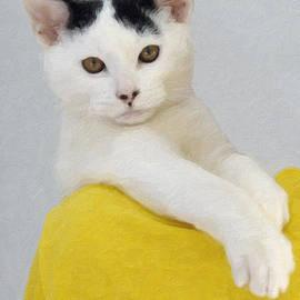Kenny Francis - Cool Cat