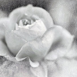 Cool Rose by Annie Snel