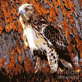 Cooper's Hawk by Judy Palkimas