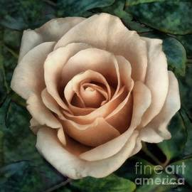 Coppered Ivory by RC DeWinter