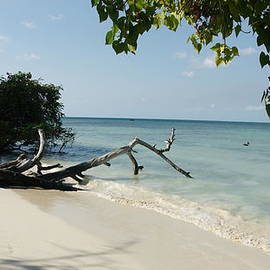 Coral Beach by Olaf Christian
