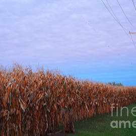 Cornfield in Autumn by Luther Fine Art
