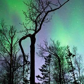 Cottonwood Aurora by Ron Day