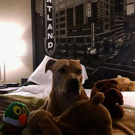 Gustave Kurz Jr - Spoiled Country Dog City Lights