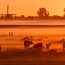 Roeselien Raimond - Cows in the Mist