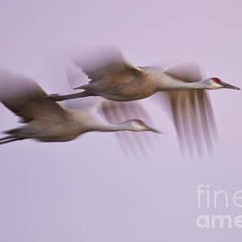 Crane blur at dusk by Bryan Keil