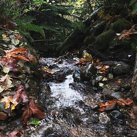 Creekside by Bill Oliver