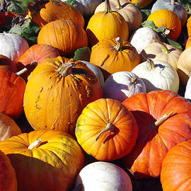 Crowd of Pumpkins by Debra Orlean