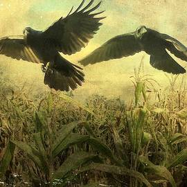 Gothicrow Images - Crows Of The Corn 2