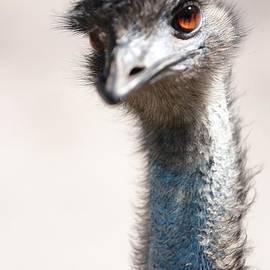 Carol Groenen - Curious Emu