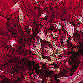David Kehrli - D Light Ful Dahlia