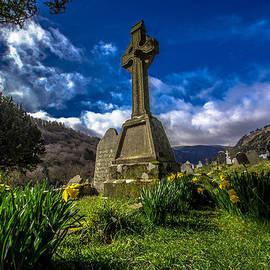 DM Photography- Dan Mongosa - Daffodils at Glendalough