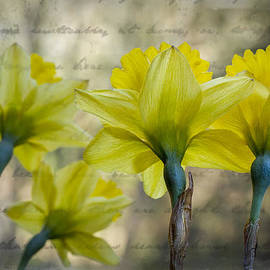 Daffodils by Debra and Dave Vanderlaan