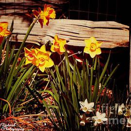 Daffy Daffodils by Bobbee Rickard