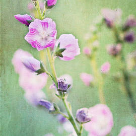 Pam  Holdsworth - Dainty Bloom