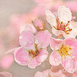 Dainty Blossoms of Spring 2