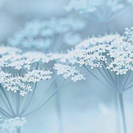 Dainty White Flowers Blue by Jennie Marie Schell