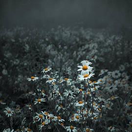 Svetlana Sewell - Daisies-Daisies
