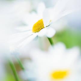 Sarah-fiona  Helme - Daisy Air