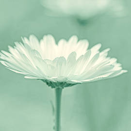 Jennie Marie Schell - Daisy Flower in Pose Light Green