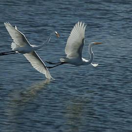 Dance of the Egrets by Ernie Echols
