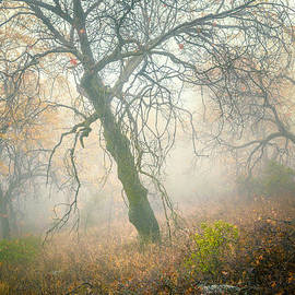 Alexander Kunz - Dancers in the Fog