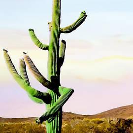 Dancing Cactus Sunrise Saguaro National Park by Bob and Nadine Johnston